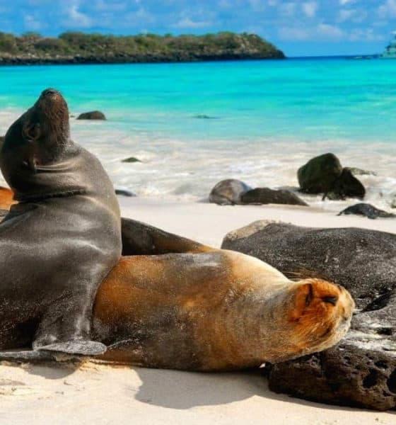 Portada.Leones marinos en los Galápagos.Foto.Tatiana Frolova