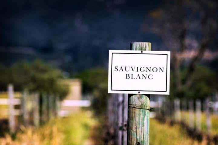 Sauvignon Blanc la princesa de todos los vinos.Foto.Vinetur.7