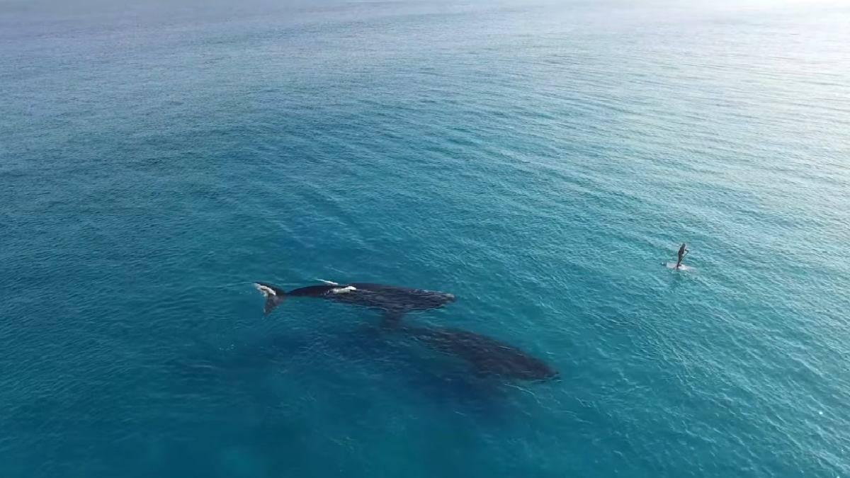 Vídeo Paddle board con ballenas. Australia. Screenshoot. Jaimen Hudson