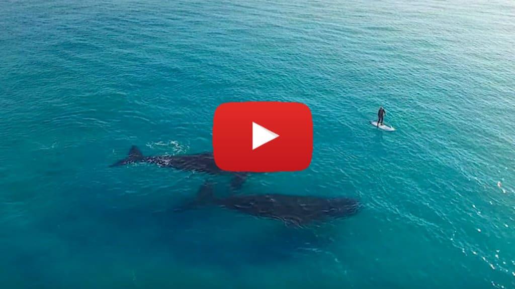 paddle board con ballenas
