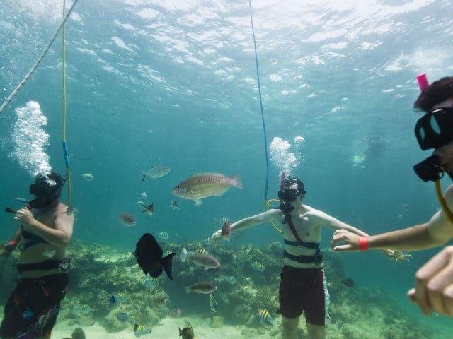 snorkeling con tiburones