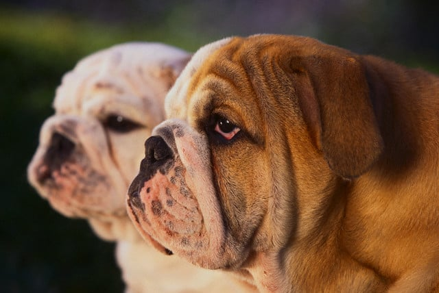 tindog mascotas