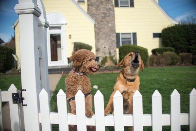 tindog perros