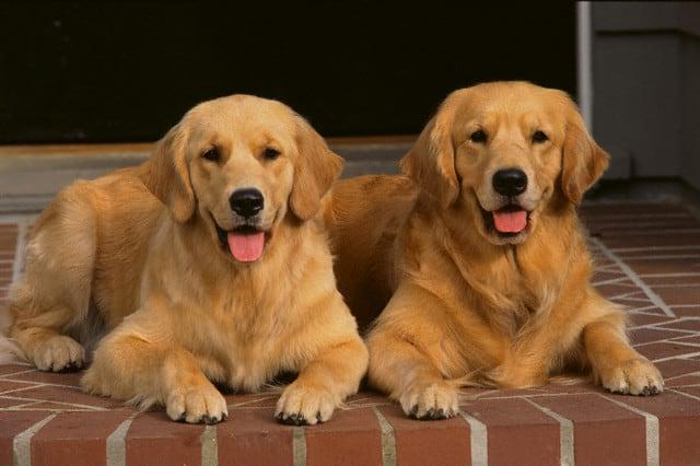 tindog tinder perros