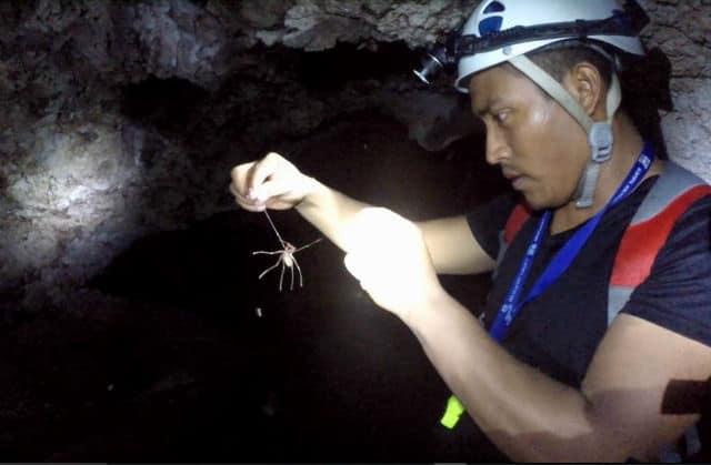 villa luz cueva araña patona