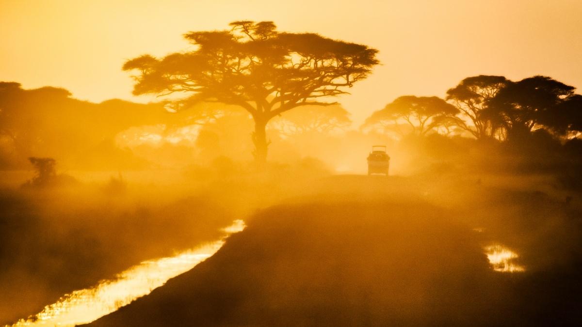 Portada Safari