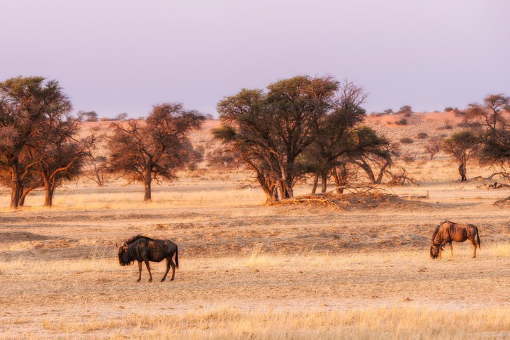 Safari fotográfico en Sudáfrica