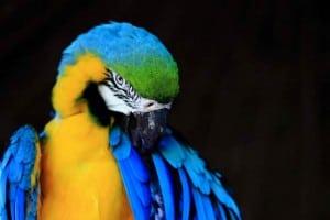 ecoparque palenque guacamaya azul