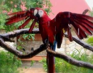 ecoparque palenque guacamaya roja