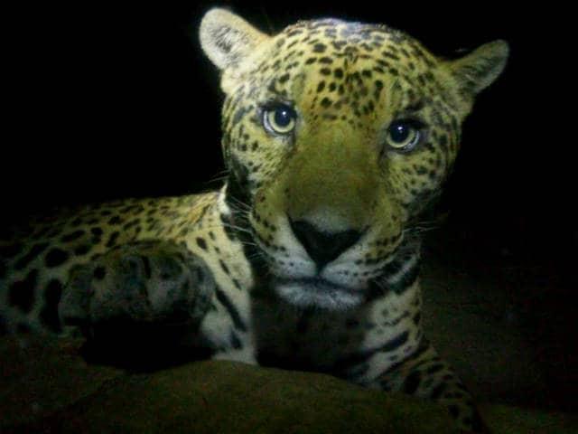 ecoparque palenque jaguar