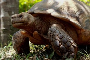 ecoparque palenque tortuga