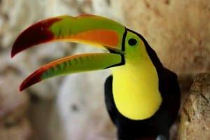 ecoparque palenque tucan