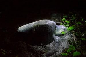 el madresal tortuga