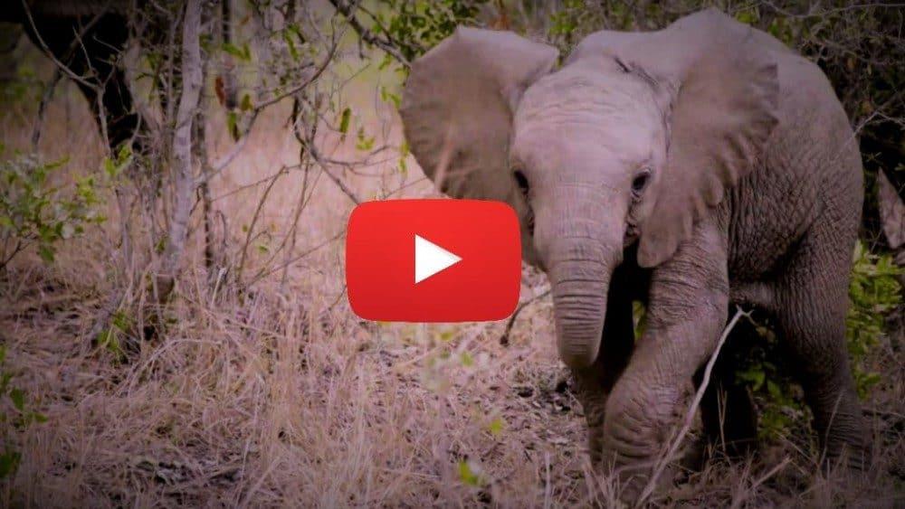 sudafrica elefante