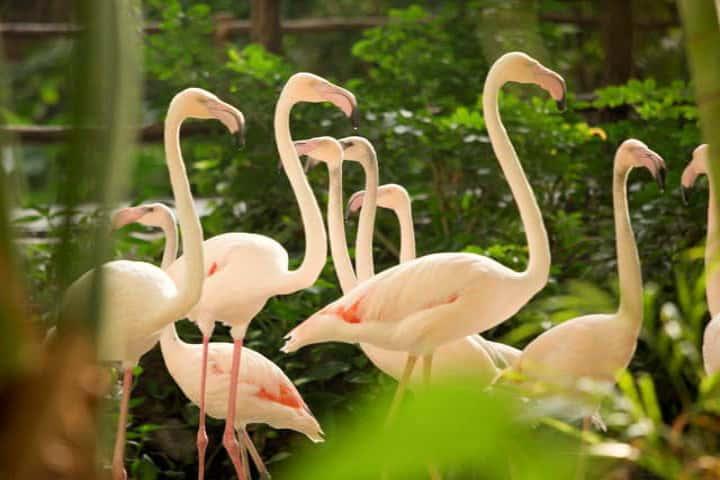 flamingos-tropical-islands-alemania1