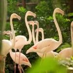 flamingos tropical islands alemania