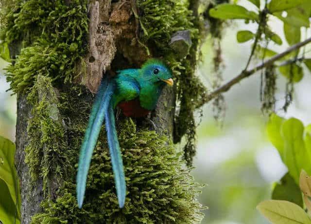 zoomat quetzal
