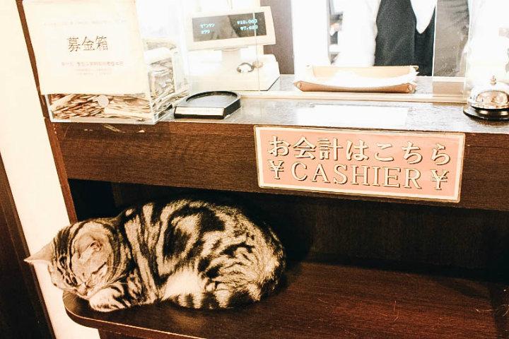 BUCKET LIST JOURNEY_SLEEPING CAT