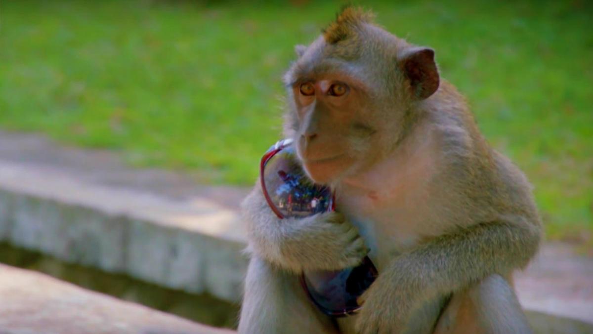 Monos ladrones en Indonesia Foto Archivo