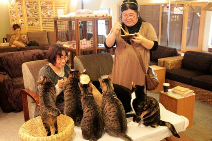 NOISE BREAK_ CAT CAFE