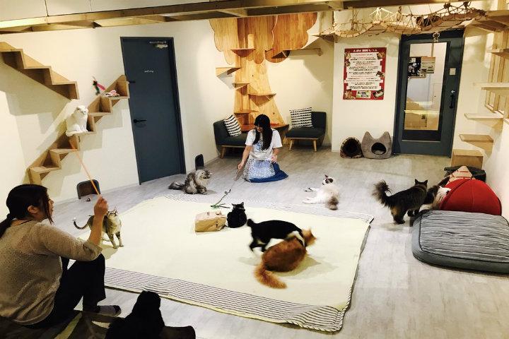 Las-cafeterías-de-gatos-en-Japón.-Foto:-The-Neighbor's-Cat-Gallery-4