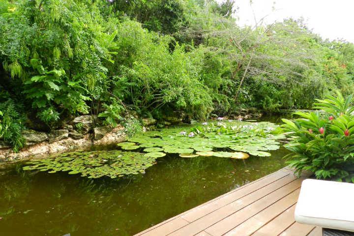 Sentirás cómo la selva de cancún te lleva hacia dentro. Foto por yovany