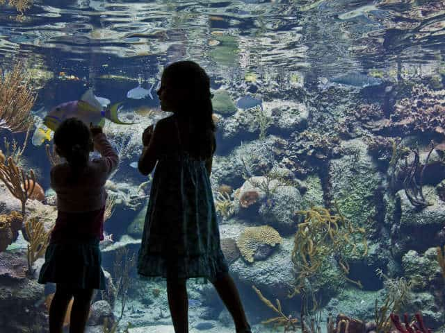 Xcaret 03 acuario