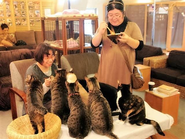 cafe cat japan