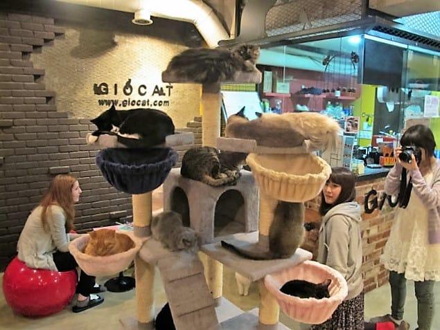 cat cafe tokyo