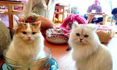 cat cofe japan