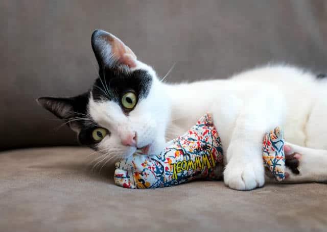 Los-juguetes-lo-harán-sentir-más-tranquilo.-Foto:-Mundo-de-gatos-6