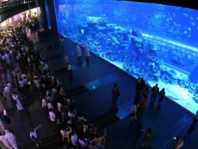Океанариум в дубай dubai grand hotel by fortune 4 дубай