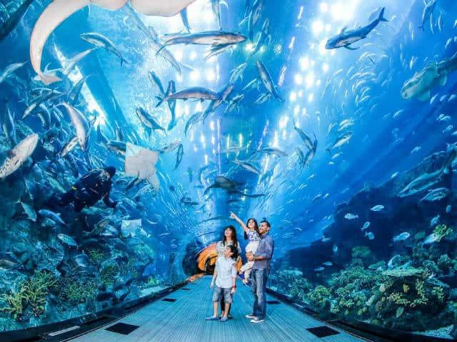 dubai zoo underwater