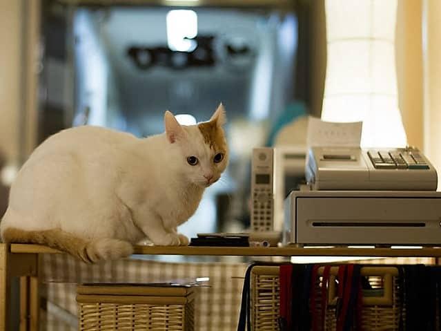 cat forklifts for sale