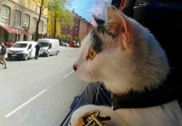 Como-viajar-con-tu-gato-en-auto.-Foto:-Archivo-7