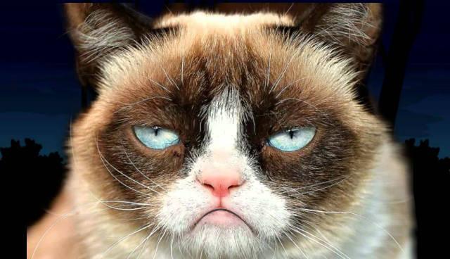 Hay-que-cuidar-cada-detalle,-para-no-irritar-a-tu-mejor-amigo.-Como-viajar-con-tu-gato-en-auto.-Foto:-Archivo-5