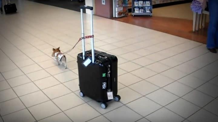 perro maleta aeropuerto