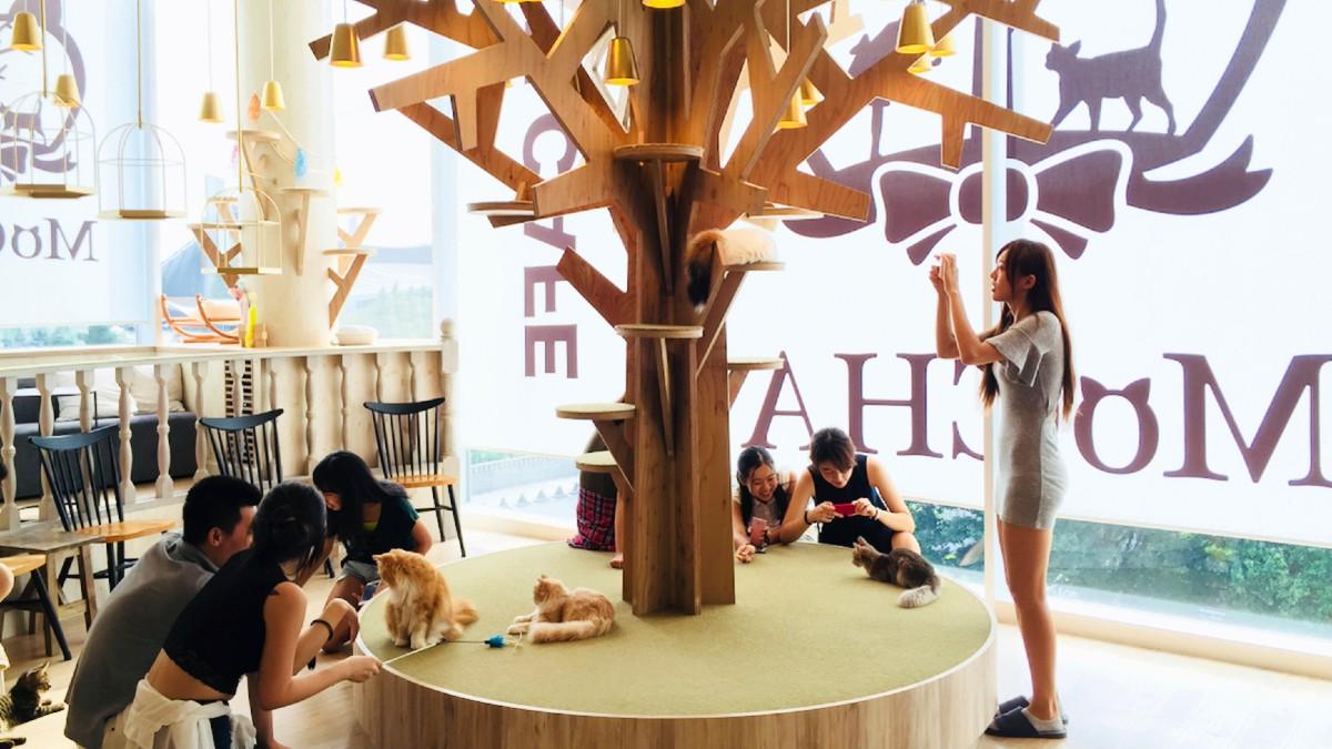 Cat-Café-en-Japón.-Foto:-Archivo-1