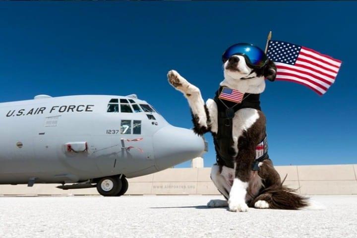 Amor-por-la-nación-Piper-el-perro-policía-Foto-Annie-Weller-2