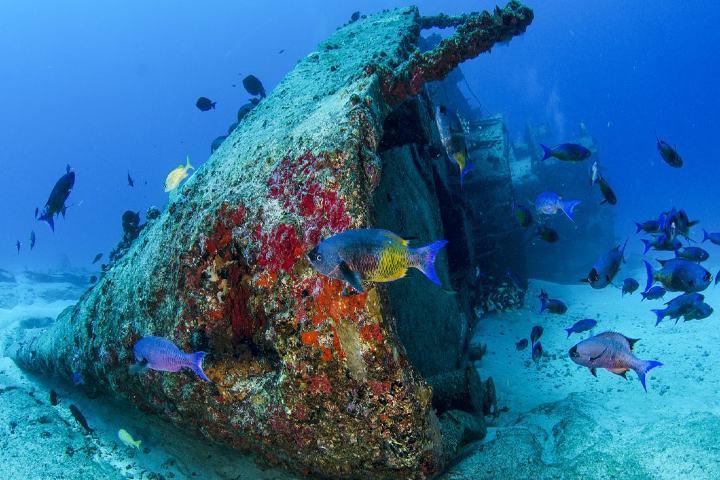 Hazaña-que-beneficiará-especies-Hunden-barco-en-Baja-California-Foto-Aqua-World-2