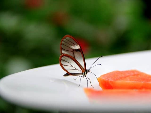 mariposario chapultepec alas de cristal greta
