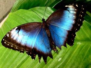 mariposario chapultepec azules