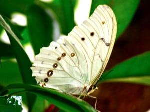 mariposario chapultepec blanca