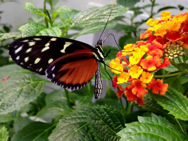 mariposario chapultepec flores
