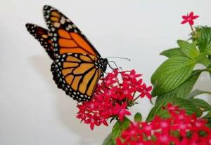mariposario chapultepec monarca