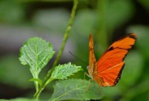 mariposario chapultepec naranja