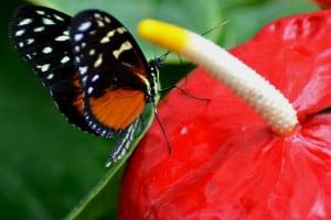 mariposario chapultepec nectar