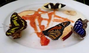 mariposario chapultepec varias mariposas