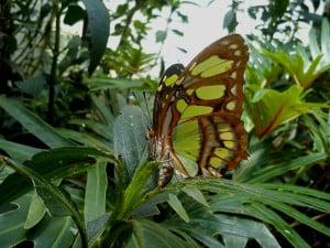 mariposario chapultepec verde