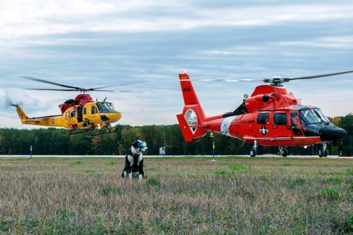 Todo-controlado-Piper-el-perro-policía-Foto-Detroit-Metro-Times-3